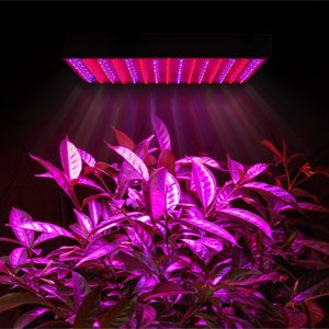 225 Blue Red Indoor Garden Hydroponic Led Grow Light Panel Aquarium Lamp
