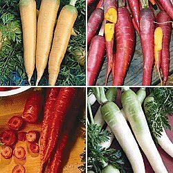 premier-seeds-direct-car15-carrot-rainbow-mix-finest-seeds-pack-of-1500
