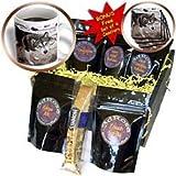 41bh7sPD 8L. SL160  Kike Calvo Arctic   Arctic Sledding Dog Churchill Manitoba Canada   Coffee Gift Baskets   Coffee Gift Basket Reviews