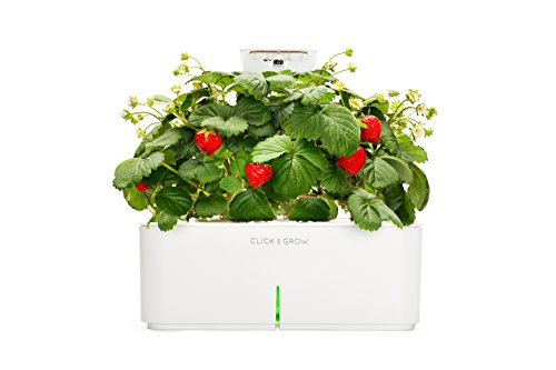 Click & Grow Smartpot Strawberry Indoor Grow Kit With Led Grow Light