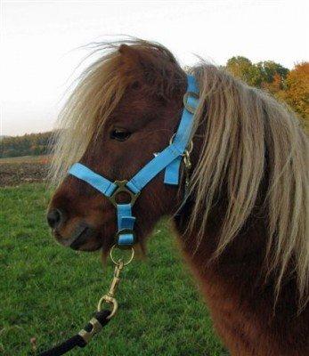 Halfter Nylonhalfter 2-fach verstellb Pony Farbe