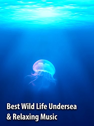 Best Wild Life Undersea & Relaxing Music