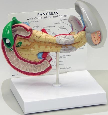 surgery for infected gallbladder