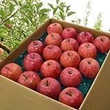 山形県産 準秀品 サンふじりんご 5kg 平均糖度15度 約14~20玉前後