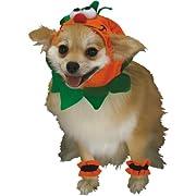 Pumpkin Dog - Medium