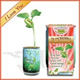 I Love You Growing Kit - I Love You Bean Sprout Valentine Plant . 99% Germination Rate.