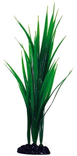 wave-bambou-plante-classique-pour-aquariophilie-taille-m