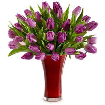 Purple Tulips Explosion