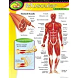 Muscular System ChartMuscular System Chart