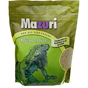 Green Iguana Basics, Diet, Housing, and Cleaning