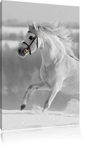 Beau cheval blanc dans la neige pré noir / blanc, taille: 80x120 sur toile angulaire élevée, XXL énormes Photos complètement encadrées avec civière, impression d'art sur murale avec cadre, moins cher que la peinture ou une peinture à l'huile, pas une affiche ou une bannière,