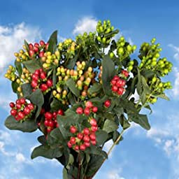 120 Fresh Cut Assorted Colors Hypericum Flowers | Fresh Flowers Express Delivery | Perfect for Birthdays, Anniversary or any occasion.