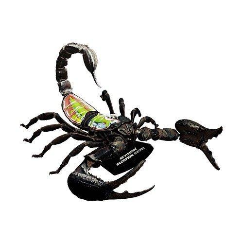 Famemaster 4D-Vision 4D-Vision Scorpion Anatomy M - 1