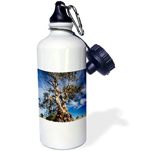 danita-delimont-australia-australia-springton-the-herbig-tree-first-home-friedrich-herbig-21-oz-spor