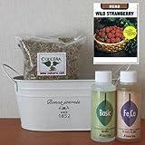 ワイルドストロベリーの栽培セット/豊作セット(液体肥料付き)プランターホワイト仕様