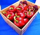 JA全農いばらき 『旬の秋野菜』国産パプリカ(赤色)