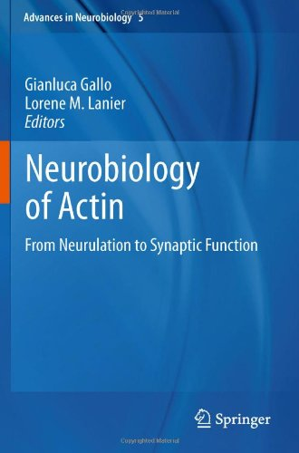 Neurobiology Of Actin: From Neurulation To Synaptic Function (Advances In Neurobiology, Vol. 5)