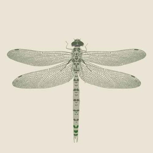 Animal Wall Decals Dragon-Fly On A Neutral Background - 36 Inches X 36 Inches - Peel And Stick Removable Graphic front-815520