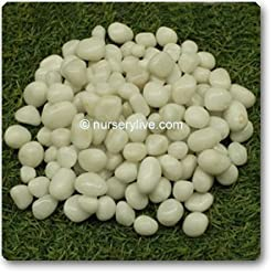 nursery live Super white marble small pebbles(500gm)