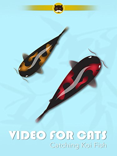 Video for Cats Catching Koi Fish