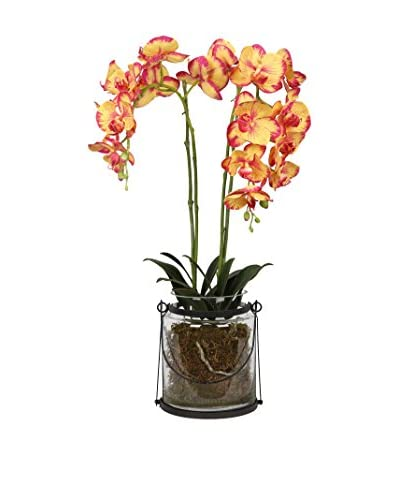 Winward Vanda in Jar, Yellow/Pink