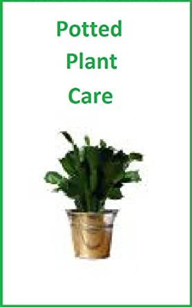 How To Take Care Of Specialty Potted Plants: Poinsettias, Gardenias, Azaleas, Amaryllis ...