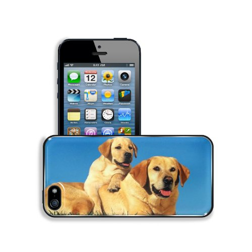 Dogs Labradors Couple Baby Puppy Care Apple Iphone 5 / 5S Snap Cover Premium Aluminium Design Back Plate Case Customized Made To Order Support Ready 5 Inch (126Mm) X 2 3/8 Inch (61Mm) X 3/8 Inch (10Mm) Liil Iphone_5 5S Professional Metal Case Touch Access front-738911