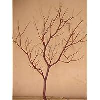 Manzanita Branches 30