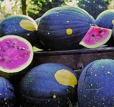 20-heirlooms-moon-and-stars-watermelon-seed-by-stonysoil-seed-companycertified-usda-organic-seeds