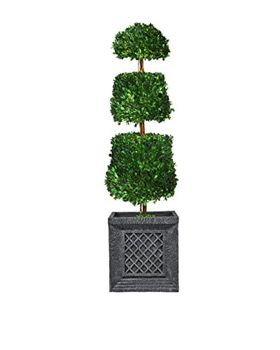 Laura Ashley 50 Preserved Natural Boxwood Cone Topiary in a Planter