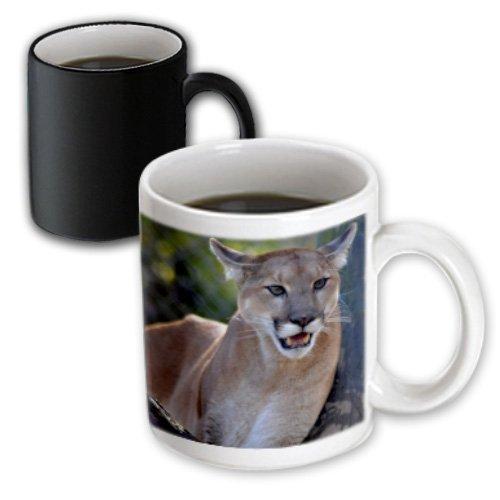 Et Photography - Big Cats - A Cougar Just Relaxing On A Branch - 11Oz Magic Transforming Mug (Mug_160971_3)