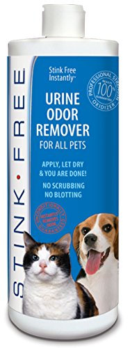 How To Get Rid Of Cat Urine Smell In The House Or Yard