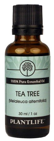 Tea Tree 100% Pure Therapeutic Grade Essential Oil - 30 ml
