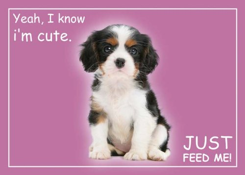 Artikelbild: Cute Cavalier - Standard Pet Place Mat