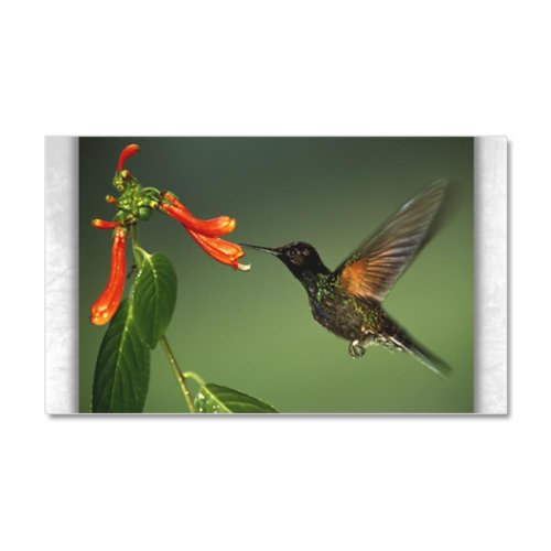 38.5 x24.5 Wall Vinyl Sticker Green Violetear Hummingbird