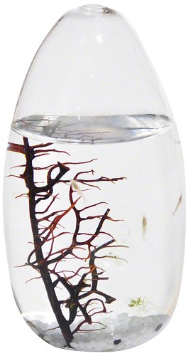 EcoSphere Closed Aquatic Ecosystem, Small Pod