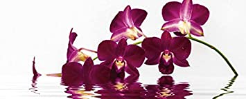 "kitchen splashback Artland Kitchen mirror Splash guard high-tech aluminum composite panels sydeen Phalaenopsis Orchid before free standing Background and great Reflection in Various Sizes and Colours available - UK 22.0"" x 70.0"""