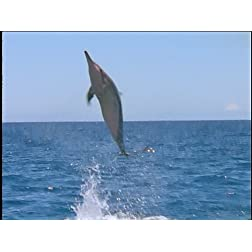 Ocean Acrobats: TheSpinner Dolphins