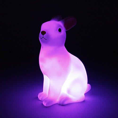 conigli-luce-notturna