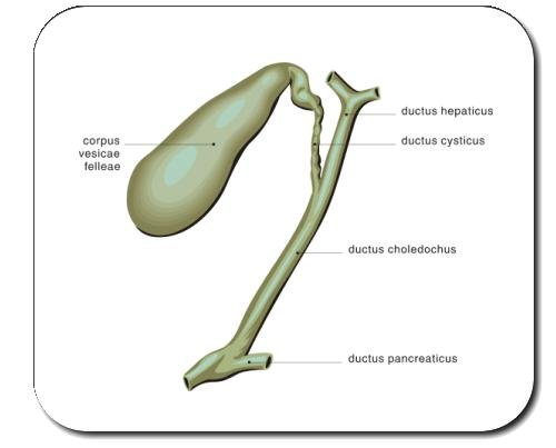 decorated-mouse-pad-with-the-image-of-gall-bladder