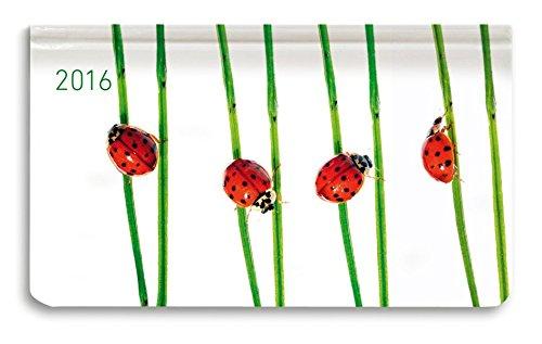 Alpha Edition 160891 Ladytimer Pad Beetles Agenda Settimanale 2016 cm 156 X 9 128 Pagine PDF
