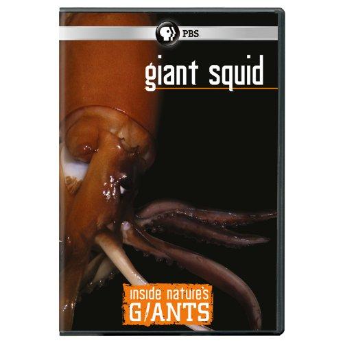 Inside Nature's Giants: Giant Squid