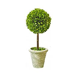 Mills Floral Company Box Topiary, Single, Small, 5\