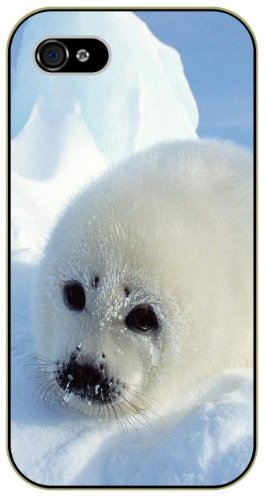 Baby Seal Pictures