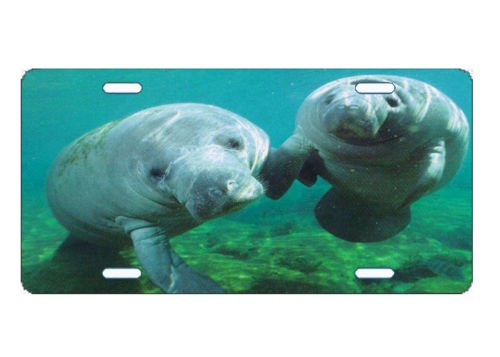 License Plate Car Tag Manatee Sherrys Stock TM