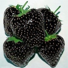 exotic-plants-nera-fragola-30-semi