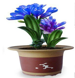 malee-grow-30-pcs-blue-color-beautiful-chinese-clivia-seeds-plants-bonsai-garden-flower-seed-semente