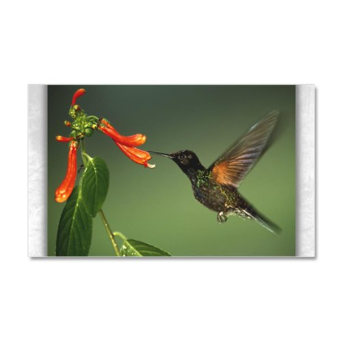 22 x 14 Wall Vinyl Sticker Green Violetear Hummingbird