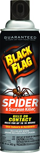 Black Flag Spider and Scorpion Killer Aerosol Spray, 16-Ounce, 12-Pack (Wolf Spray compare prices)