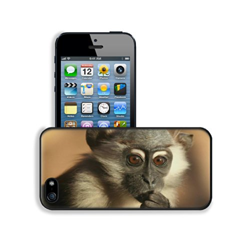Baby Monkey Baboons Wildlife Animal Apple Iphone 5 / 5S Snap Cover Premium Leather Design Back Plate Case Customized Made To Order Support Ready 5 Inch (126Mm) X 2 3/8 Inch (61Mm) X 3/8 Inch (10Mm) Luxlady Iphone_5 5S Professional Case Touch Accessories G front-484158